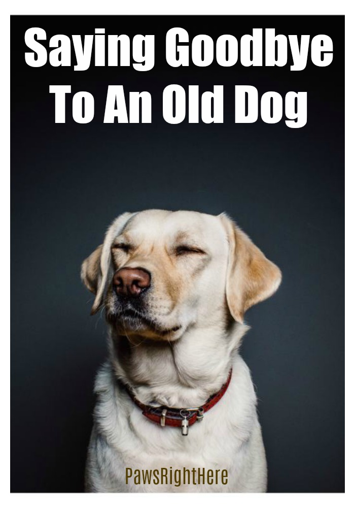 Saying goodbye to an old dog