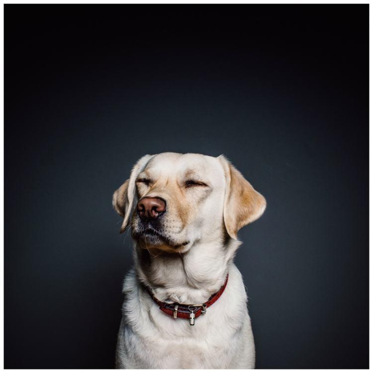 saying goodbye to your old dog