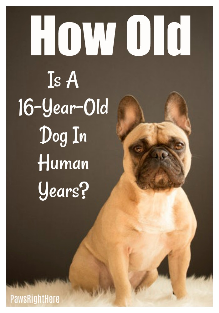 How old is a 16-year-old dog in human years