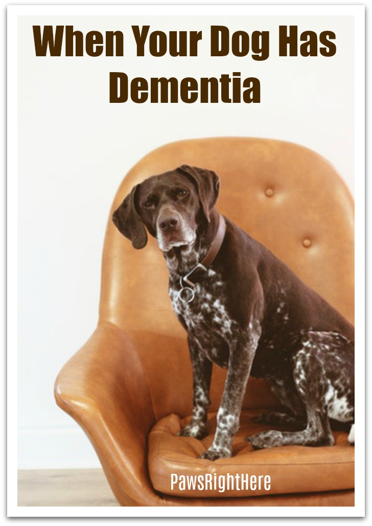 When your dog has dementia