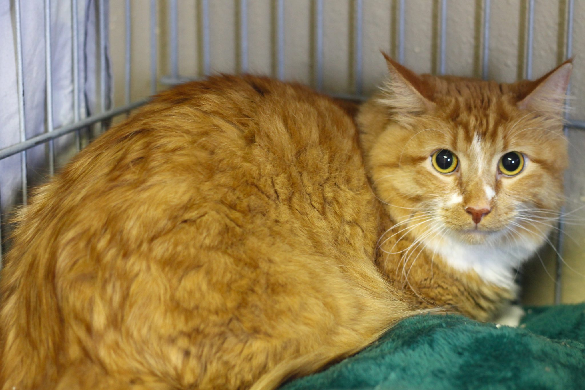 anne arundel county animal shelters