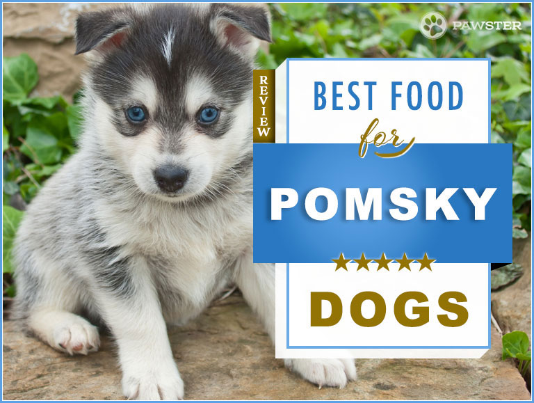 Foods for Pomsky And Treatment