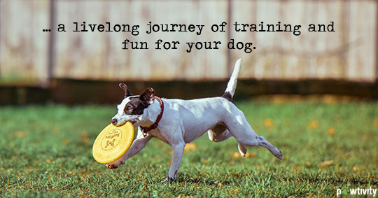 Learn to Play Disc With Your Dog