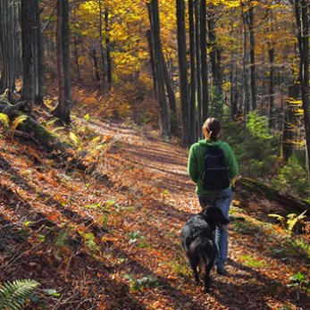 .Go Hiking With Your Dog