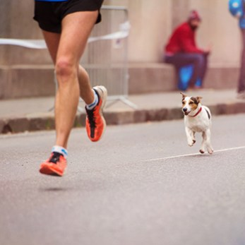 Participate In A Doggy Run With Your Dog