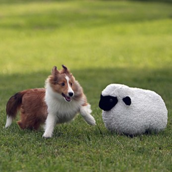 Dog Outside with Stuffed Sheep Animal