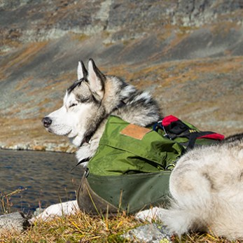 Dog with daypack resting at the foot of the mountains near a lake after hiking or backpacking