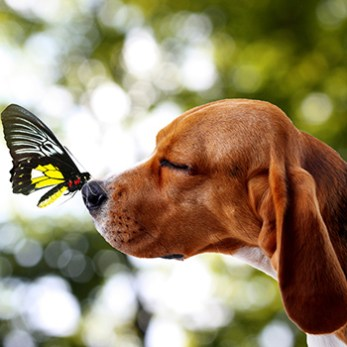 Butterfly Perched On Brown Dog's Nose