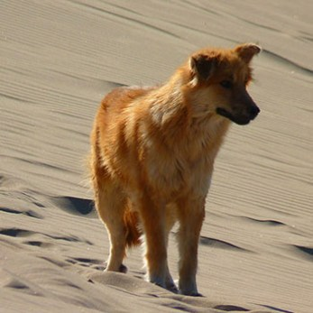 Go Desert Camping With Your Dog