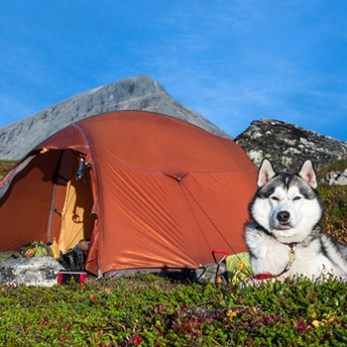 Take your dog camping.
