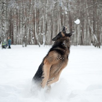 Snowball Catch