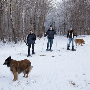 Go Snowshoeing With Your Dog