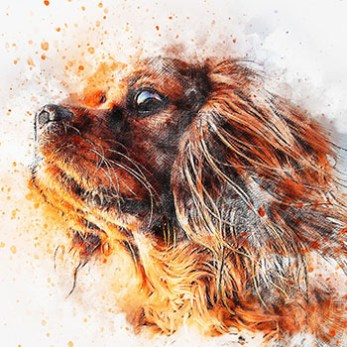 Paint Your Dog