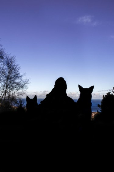 man and his dogs silhouette