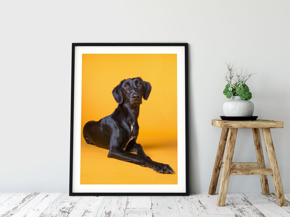 Award-winning professional pet photography, dog photography, Dublin, Wicklow, Ireland