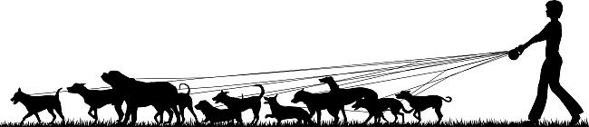 silhouette of dog walker
