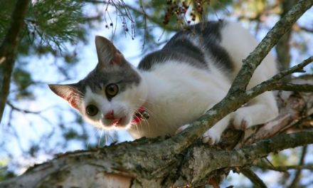 How To Save a Treed Cat