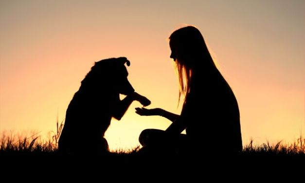 Adoption: When it's Time To Give Up Your Pet