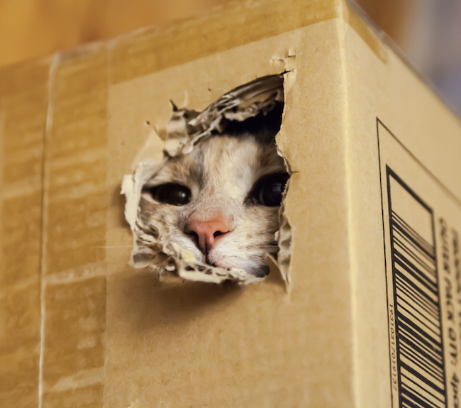 Why Do Cats Like Fitting in Small Spaces?