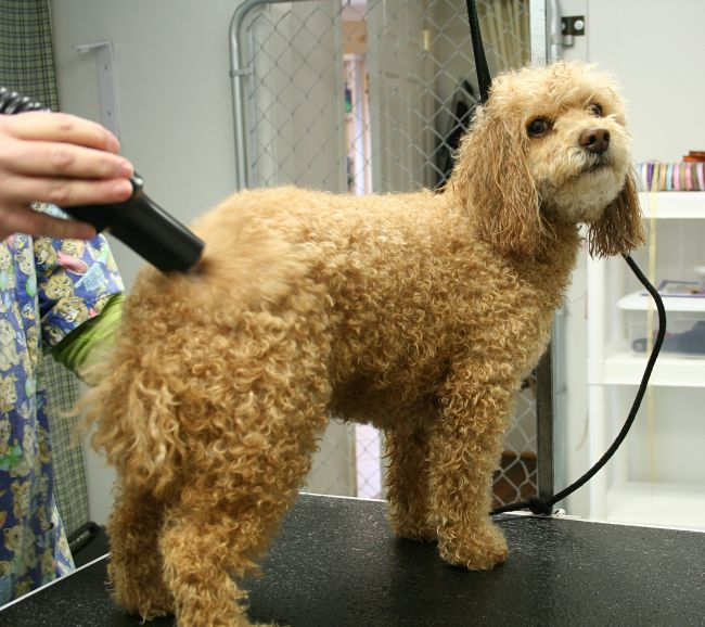 Basic Grooming Treatments for Dogs and Cats