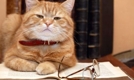 The Brightest and Best:  Top Ten Smartest Cat Breeds