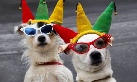 Great Trips and Events for Dog-Lovers