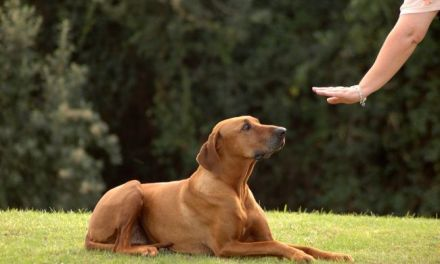7 Basic Commands Every Dog Needs to Know