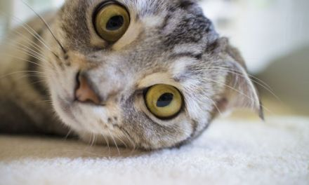 Why Cats Are Said to Have 9 Lives: Origin of the Myth