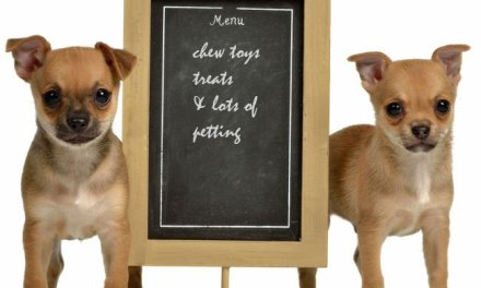 Dog Cafes