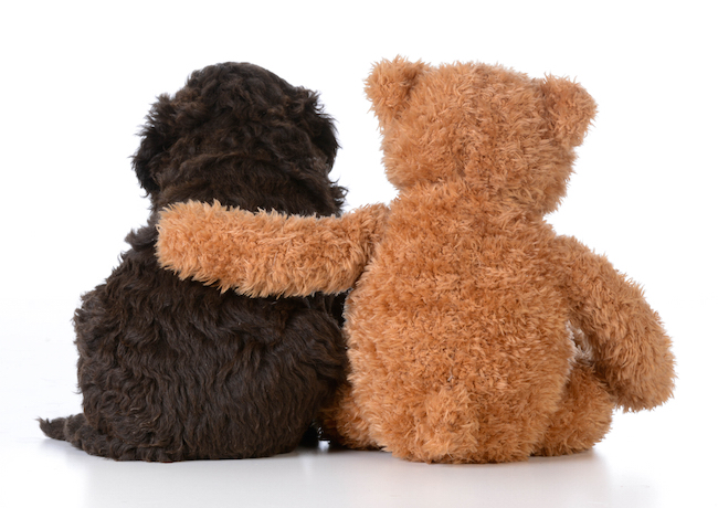 10 Dogs That Look Like Teddy Bears