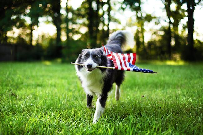 Patriotic Pups: Dressing The Part