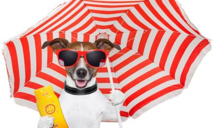 Blocking The Sun: How to Protect Your Pet From Getting Burned