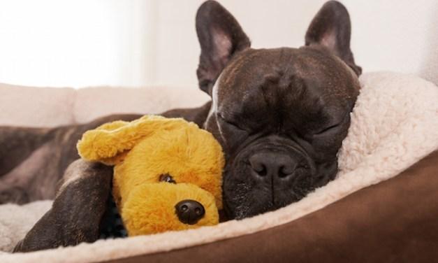 Why Do Dogs Sleep So Much?