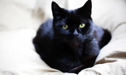 Myths About Black Cats