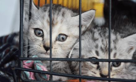 Illegal Pet Trade in Europe