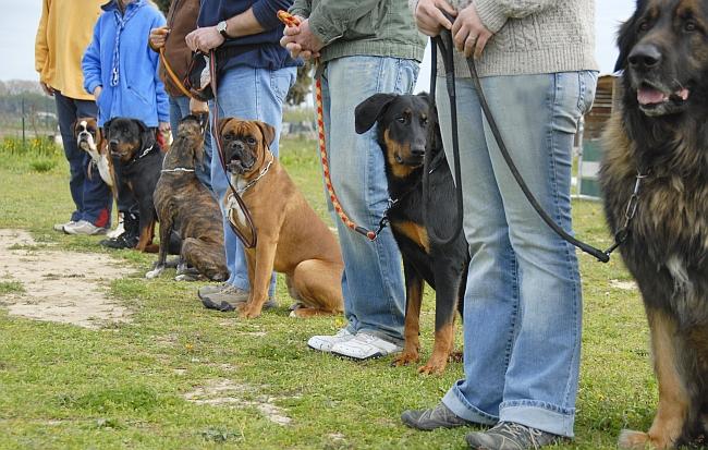 Training Aggressive Dogs