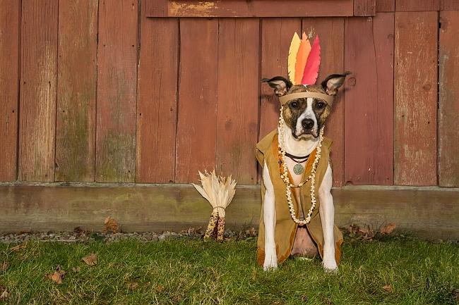 Top 10 Dog Feeding Tips for Thanksgiving