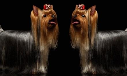Never Say Goodbye: Cloning Domestic Pets