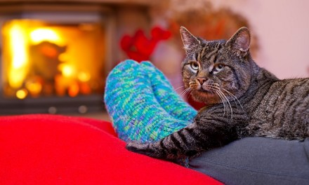 How to Prepare Your Home For a Foster Pet