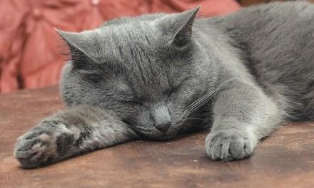 Renal Failure in Senior Cats