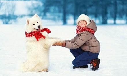 Winter Worries for Pets