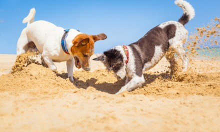 Beach Etiquette For Dogs