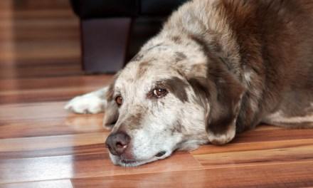 Lifestyle Tips For Adopting Senior Pets