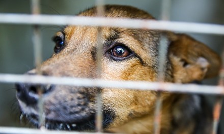 Shelter Pets Most Likely to be Overlooked
