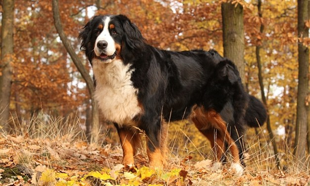 The Most Athletic Dog Breeds