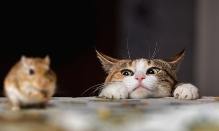 Signs That Your Cat Is Plotting Your Demise