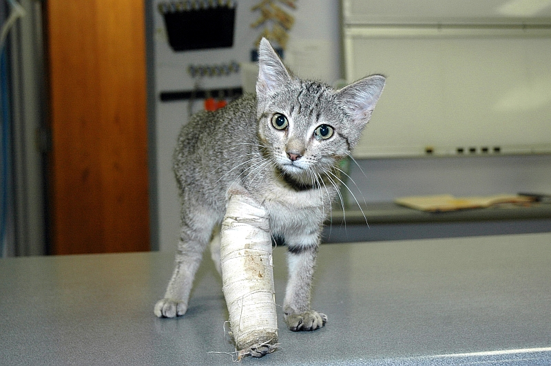What To Do When Your Pet Gets a Fracture