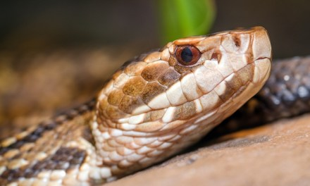 Snake Bite Symptoms and Severity