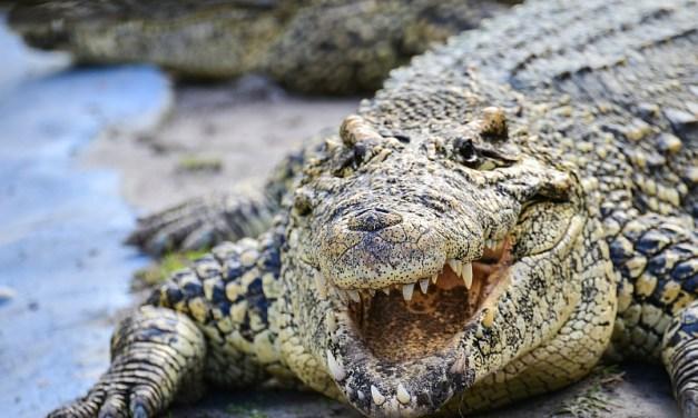 Wayward Wild Animals and the Exotic Pet Trade