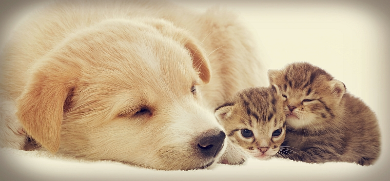 Weaning Kittens and Puppies